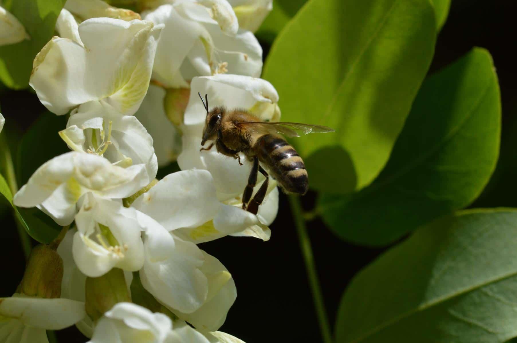 Bienenstocklufttherapie – Kosten und Kostenübernahme