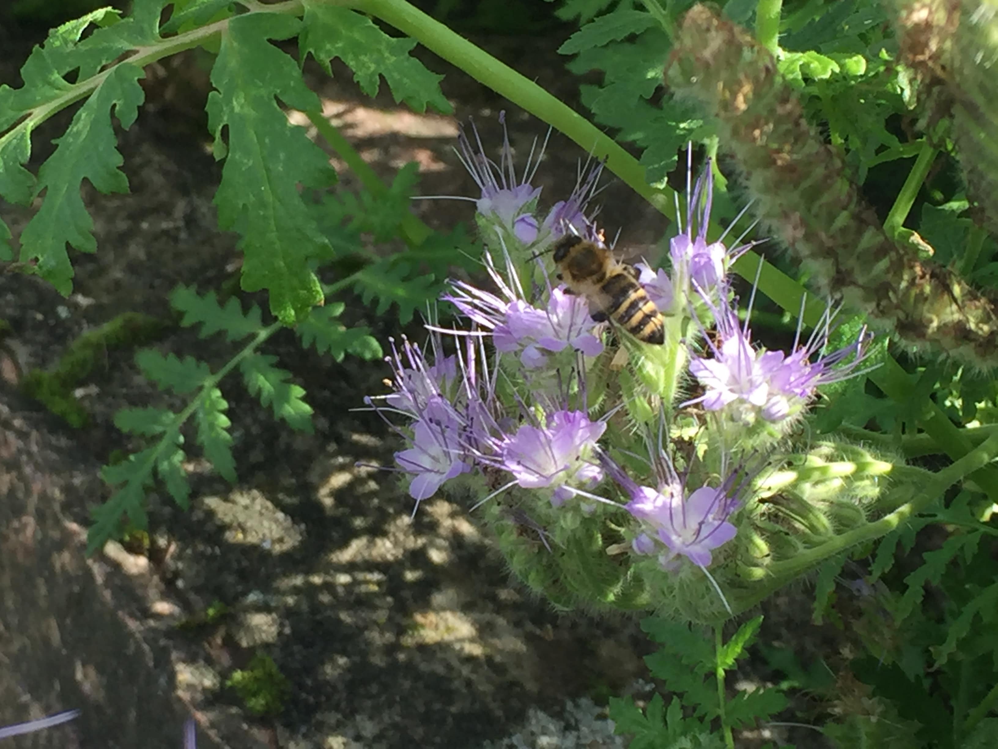 Bienenstockluft bei folgenden Erkankungen